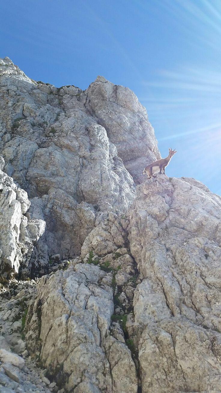 Cestou Canalone Findenegg na Jôf dí Montassio a dále hřebenem přes Cima di Terrarossa