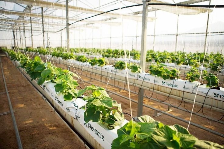 Un oasis para producir 130.000 kilos de vegetales al año, con desalación de agua, producción de sal e instalaciones fotovoltaicas incluidas.