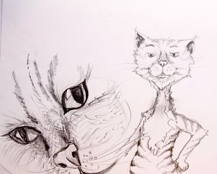 My interpretation of the Cat from The Owl & The Pussy Cat - http://www.tinavdb.com