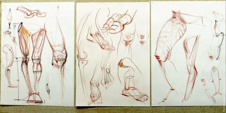 Об основных пропорциях, тазе, ногах, грудной клетке и передней поверхности торса: Рисунки: