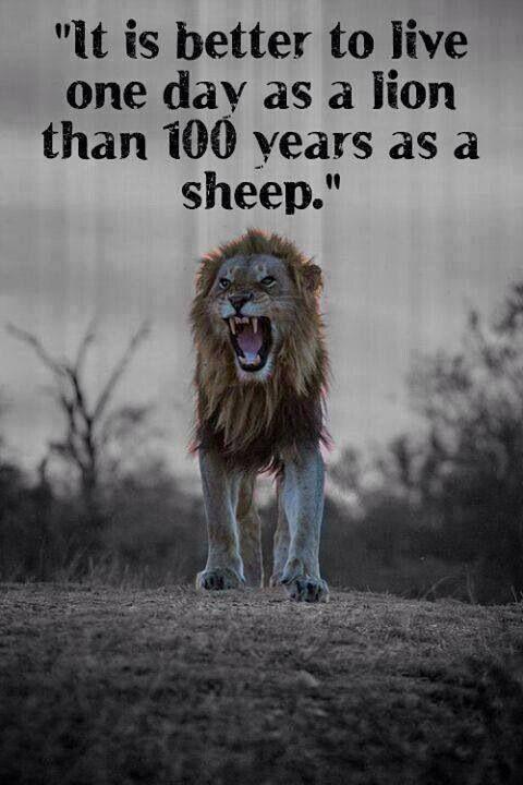 Lion, Sheep, Wolves, Sheepdog.   Lions survive!