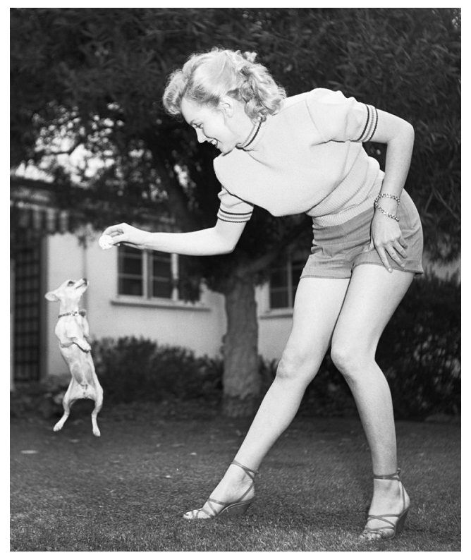 A picture of Marilyn Monroe with a chihuahua - my life is complete