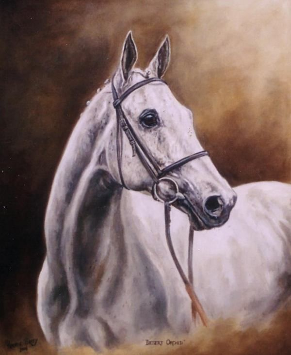 Desert Orchid. Top race horse never gave up a real star