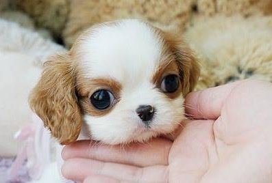 OMG this is unbearably cute!!