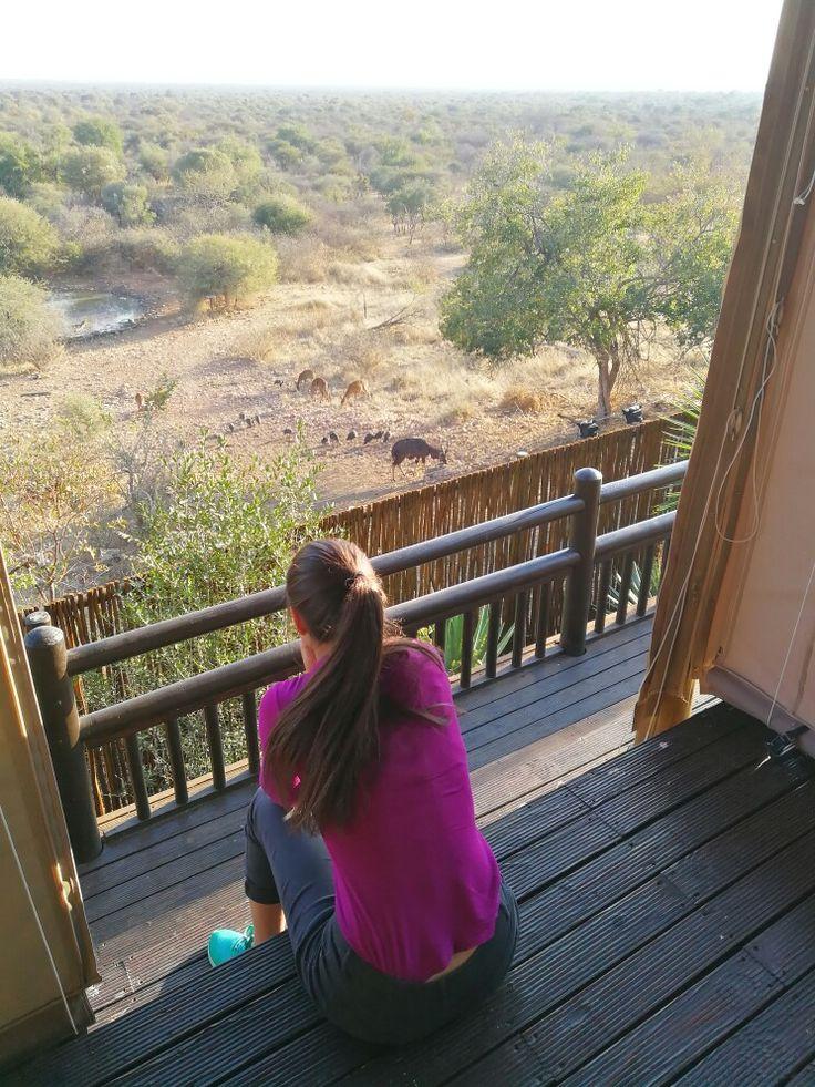 South Africa  Wildlife Mabalingwe #iwanttobeamodel