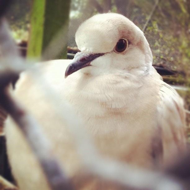 #bird at Kowhai Park in #feilding #nz #newzealand #instagram