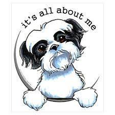 Black/White Shih Tzu :: It's All About Me   Sticker