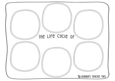 The Life Cycle of.....