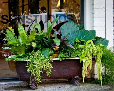 old tub planter. awesome!