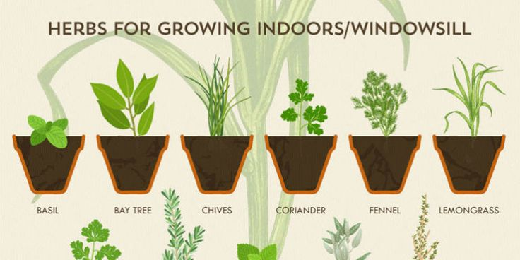 How to Grow an Herb Garden - Herb Growing Chart. This will be the year you finally get it right.