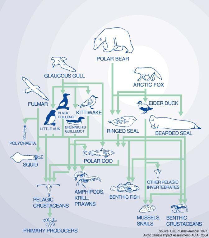 Polar Ecosystem Food Chain