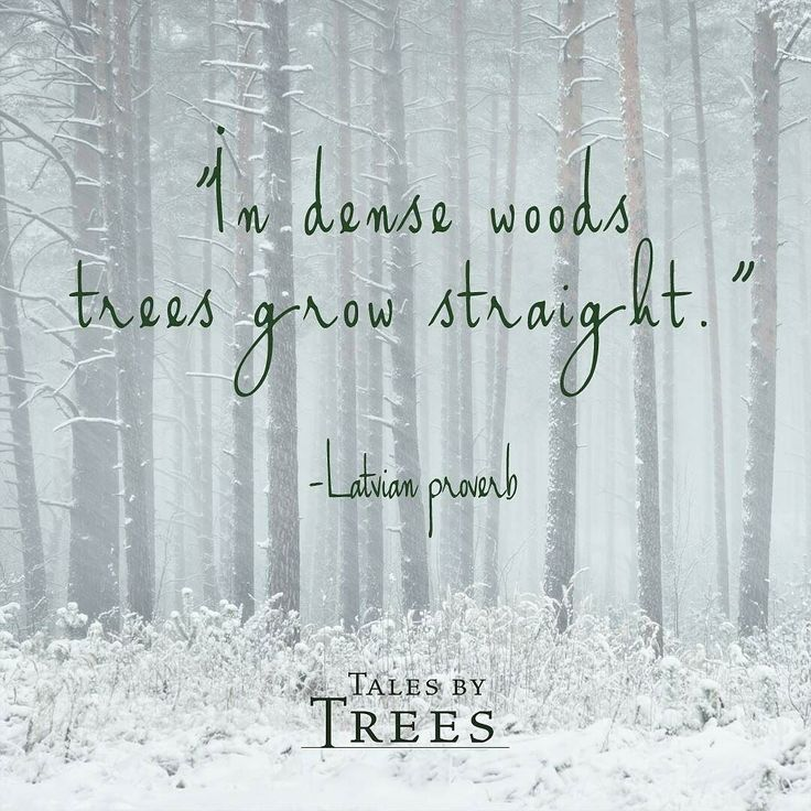 #quote #life #talesbytrees