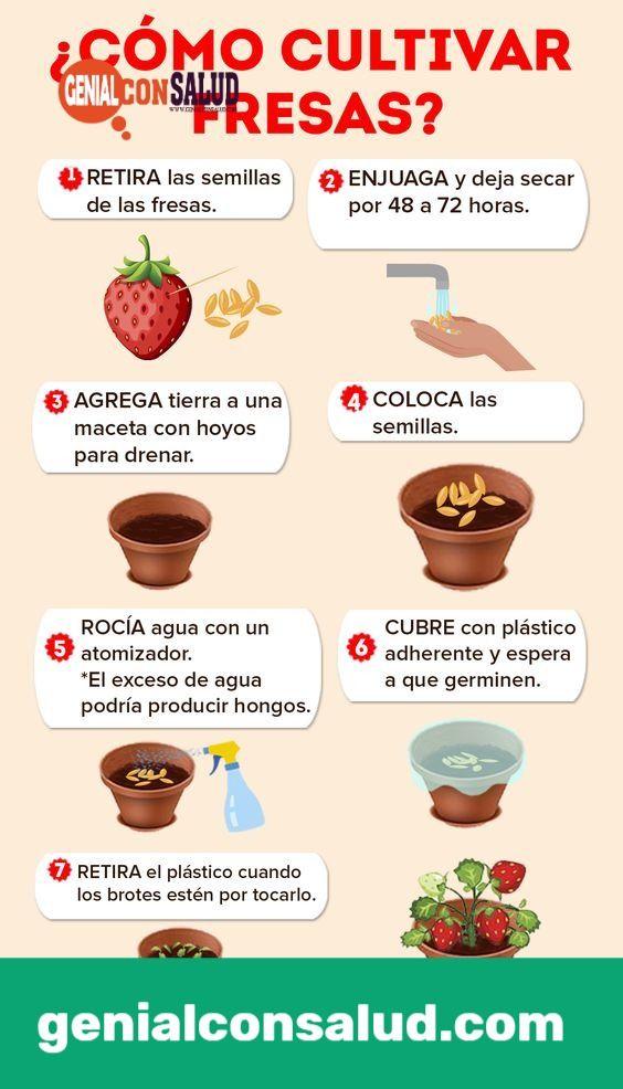 Como cultivar fresas desde tu casa