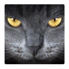 Macska falikép