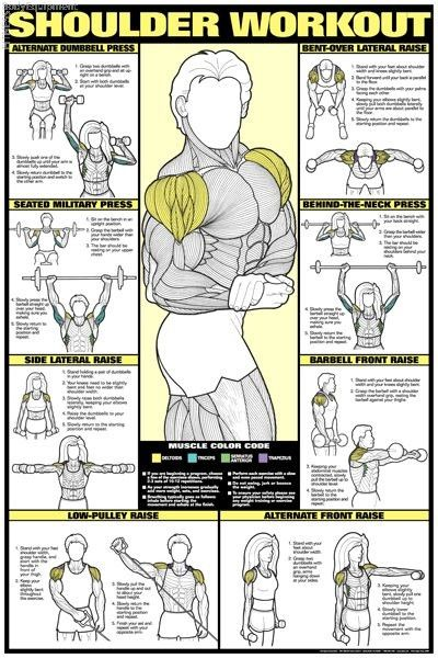 Shoulders Workout Chart - Get Ripped!!! some tips at RippedTips.com