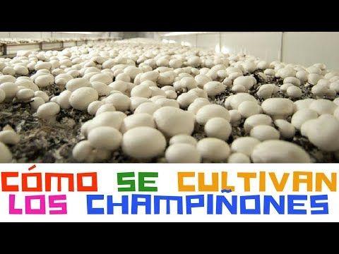 más de 25 ideas increíbles sobre compost de champiñón en pinterest