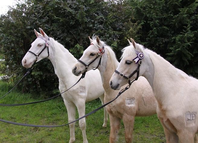 3 of my beautiful foals.