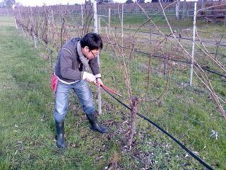 Yottecott NZ Limited を通して ワイン専門留学を実現された関川武利さんの体験談