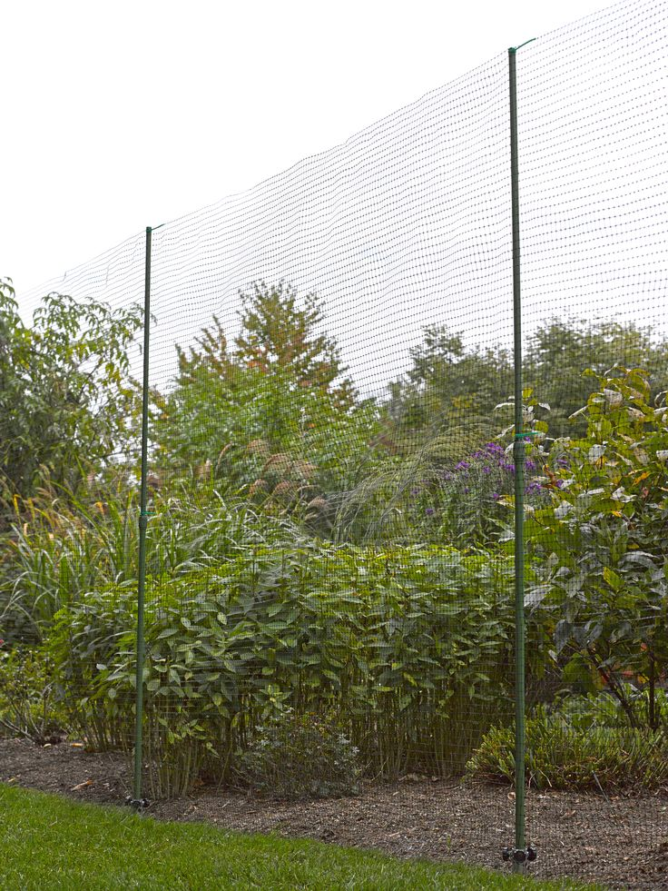 12 best images about deer proof garden ideas on pinterest for Fishing line deer fence