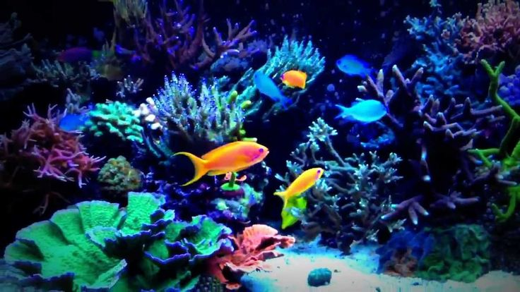 18 best red sea aquariums videos images on pinterest for Aquarium recifal complet