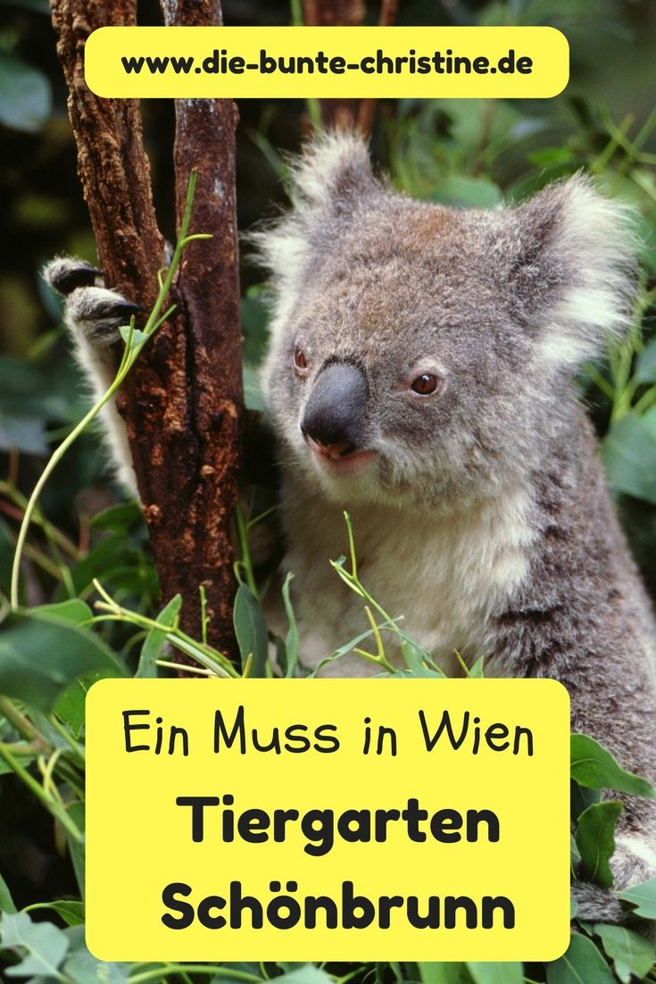 Tiergarten Schönbrunn in Wien: Der schönste Zoo der Welt? (Zoo Vienna)