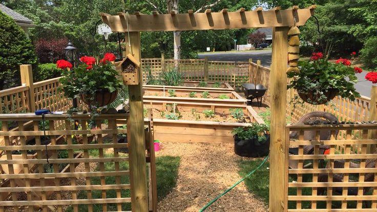 my GARDEN!! Raised beds Front Yard Garden Trellis Fence Woodchips Vegetables