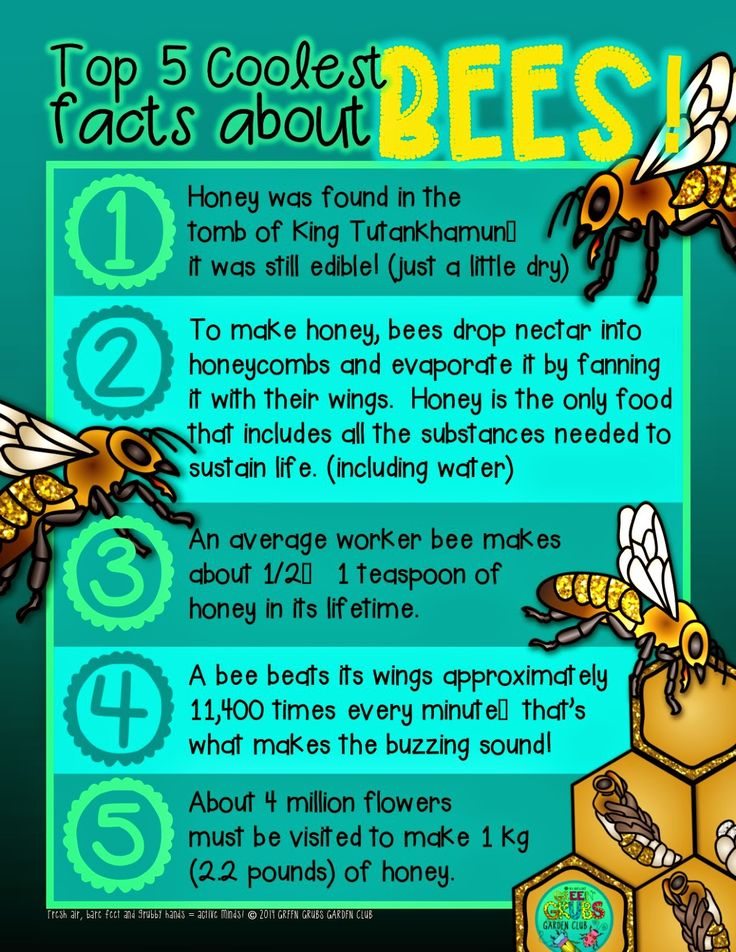 ~FREE PRINTABLE~ Top 5 coolest facts about... Honey Bees... Buuuzzzzzz! {Green Grubs Garden Club Blog}