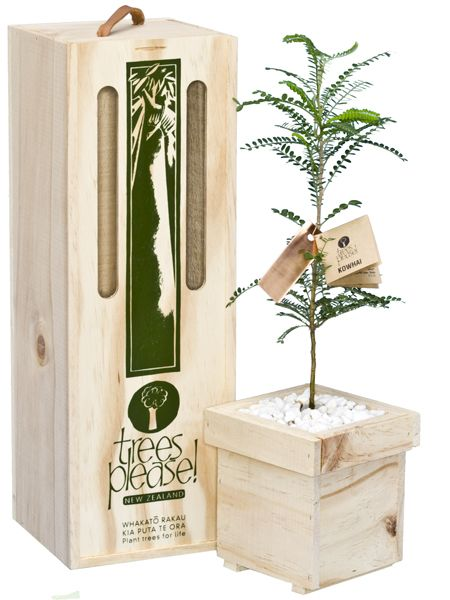 Kowhai tree - native tree boxed and delivered  for Father's Day by www.nztreeplease.co.nz