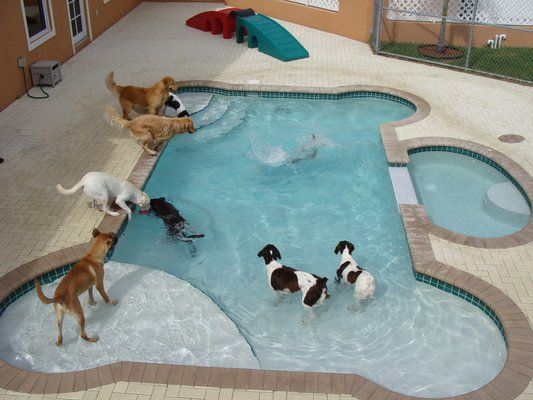 This overnight doggie daycare throws pups a special, splashy bone. See more at Country Inn Pet Resort & Animal Hospital »