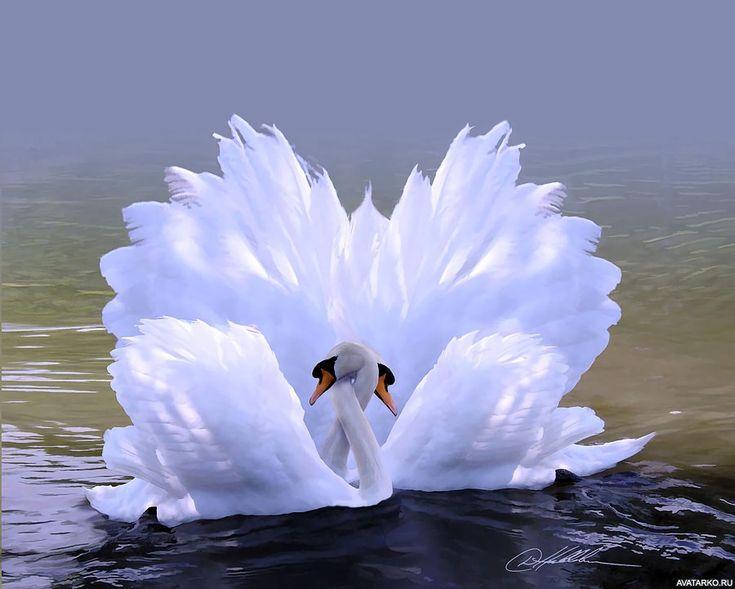 какое белая птица любви картинки албании