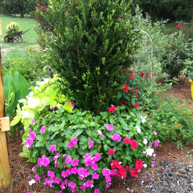 62 Best Ideas About Flowers For Dry Climates On Pinterest