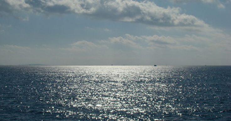 Animales y plantas en la zona hadal. La zona hadal es la región mas profunda del océano, se extiende desde los 6 000 metros hasta 11 000 metros por debajo de la superficie. Esta zona no se extiende a lo largo del suelo del océano, sólo existe en las zanjas mas profundas del océano. Al no llegar la luz a esta parte del océano es imposible que las plantas prosperen, pero existen ...