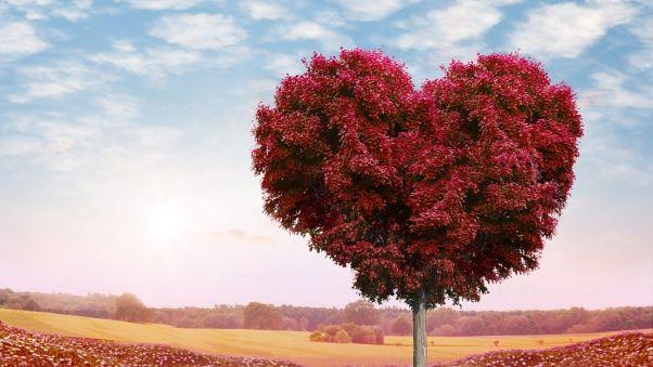 Обои дерево, сердце, фотошоп, листья