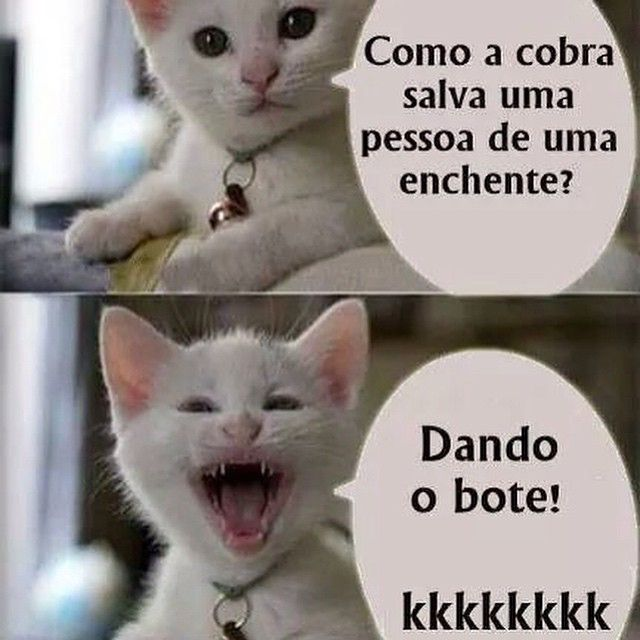 Só para descontrair um pouco... Kkkk boa noite amores!! Durmam com os anjos . #cadernodalu #maceioblogs #instablog #inspiracao #inspirador #boanoite #durmambem #frasesengracadas #cat #gato #piada