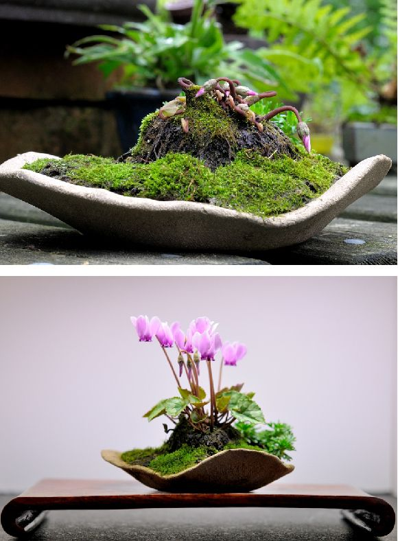 Cyclamen version mini jardin japonais plantes for Jardin japonais miniature