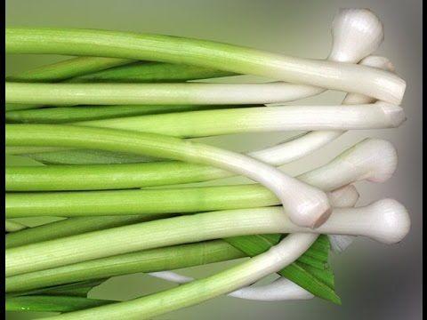 mejores 163 imágenes de hortaliza en pinterest   huerto casero