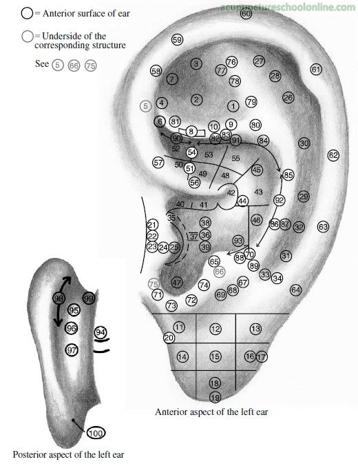 principles of ear acupuncture pdf
