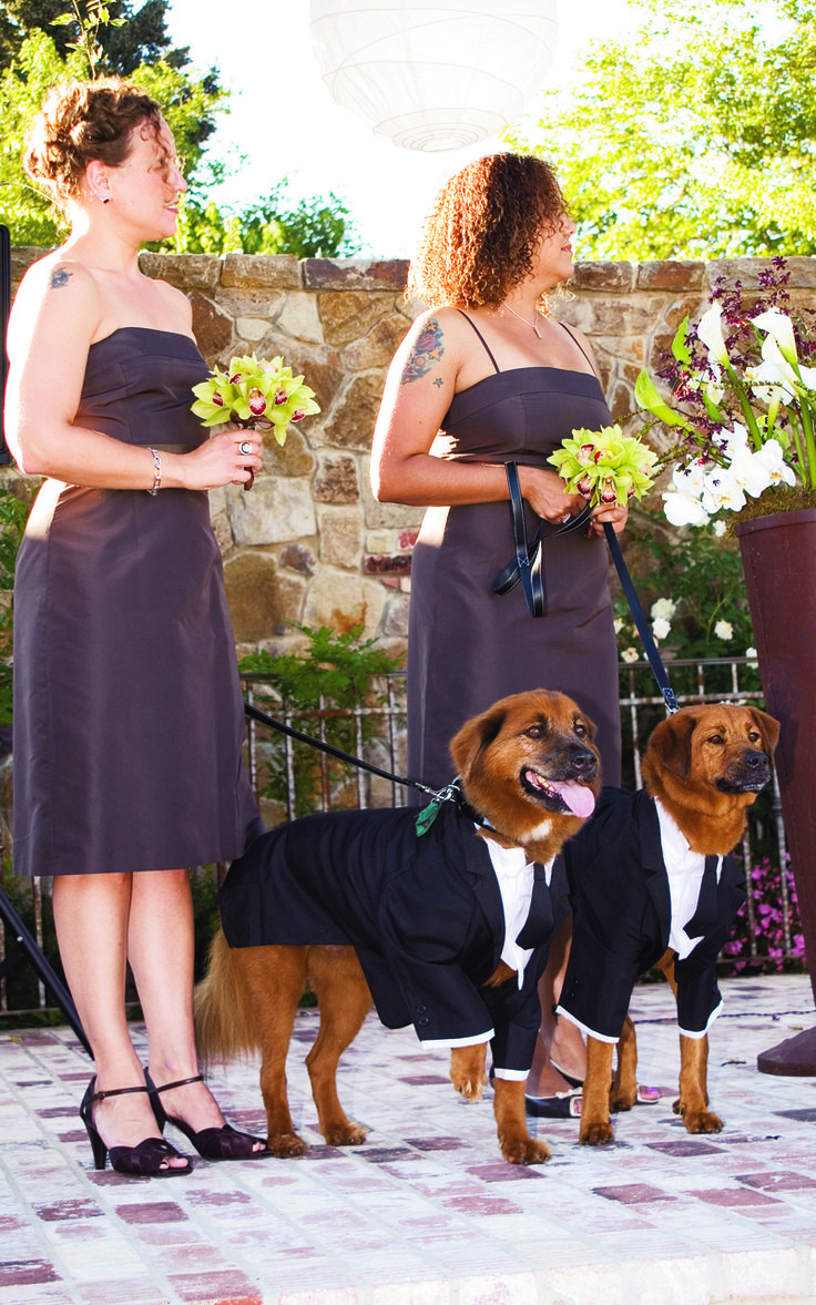 The couples' dogs dressed in tuxedos for the wedding.