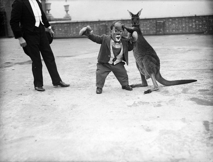 8 décembre 1932 : Six Foot, un artiste de cirque nain tente un combat de boxe face à un kangourou avant un spectacle à Kingston-on-Thames.