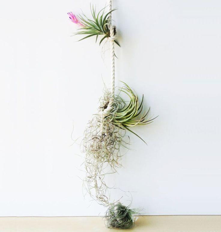 06-maneiras-criativas-de-exibir-plantas-aereas