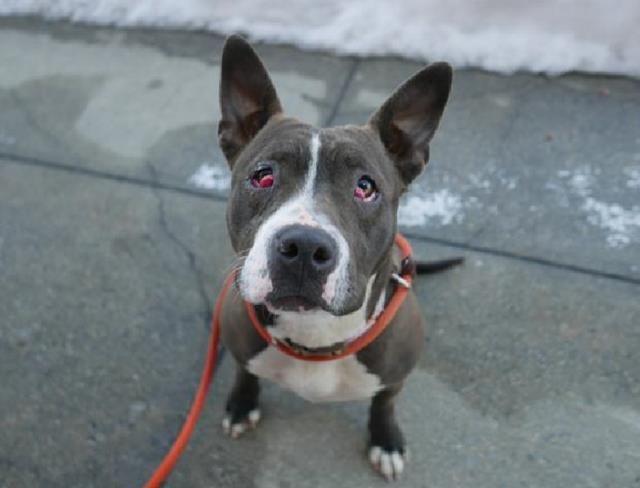 1082 Bedste Hunde medicinsk behov New York Acc Donationer-5134