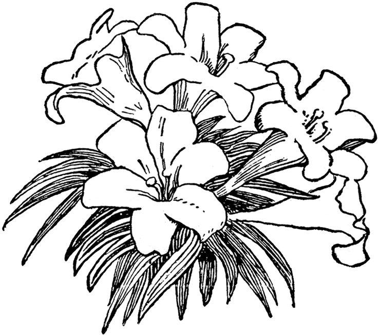 free+vintage+digital+stamp_lilies.png 1,600×1,418 pixels