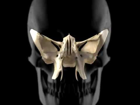3D Tour of the Cranial Bones