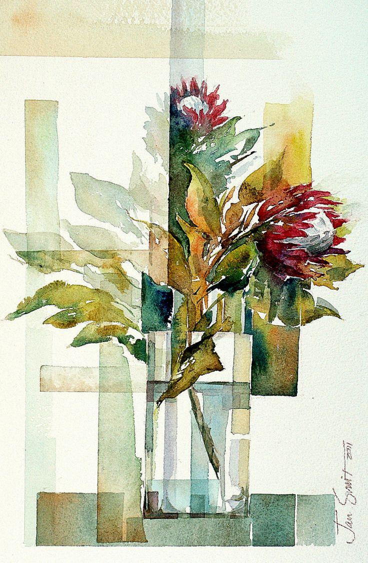 Proteas, Jan Smit #watercolor jd