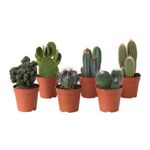 IKEA - CACTACEAE, Roślina doniczkowa