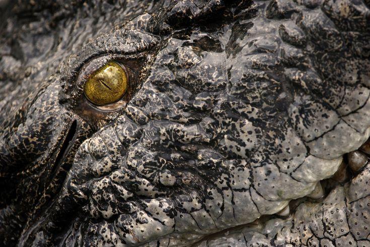 Los 10 animales más peligrosos de Australia