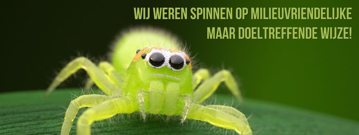 spider-buster - Google zoeken