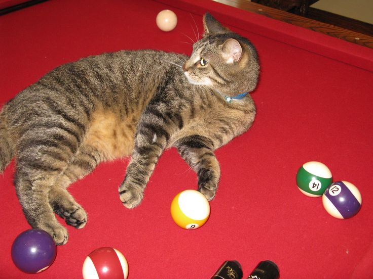 Casimir is a skillful billiards player
