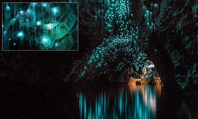 Spellbinding images show glow worms illuminating New Zealand caves