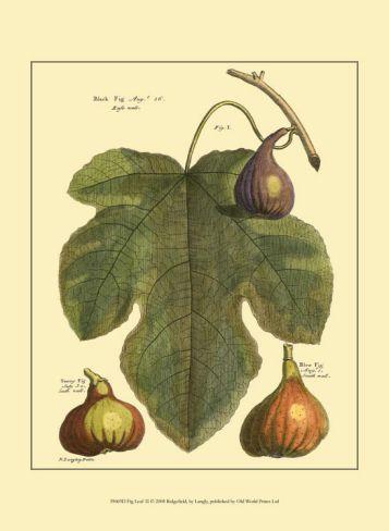 Fig Leaf II Print by Langley at Art.com